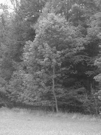 Pennsylvania Woods