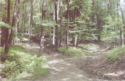 Dirt Path