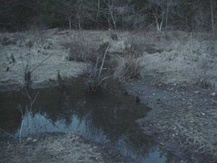 Dark Swamp Puddle